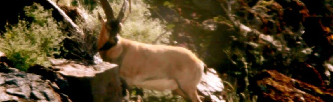 "FILM: ZAC GRIFFITH'S FLORIDA MOUNTAINS IBEX HUNT: ""Season 2, Week 1″"