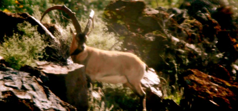 ZAC GRIFFITH FLORIDA MOUNTAINS IBEX S2 E1
