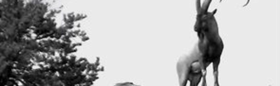 """FILM: ZAC GRIFFITH FLORIDA MOUNTAINS IBEX: """"Teaser"""""""