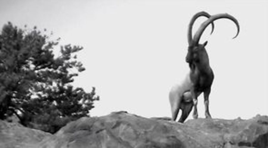 "FILM: ZAC GRIFFITH FLORIDA MOUNTAINS IBEX: ""Teaser"""