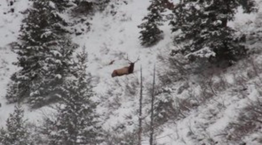 "FILM: ZAC GRIFFITH'S UTAH ARCHERY ELK HUNT: ""Golden Brown"""
