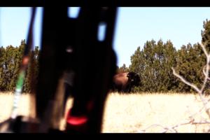 Buffalo Safari Clip