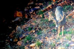 "ZAC GRIFFITH ""SPLIT"" MUZZLELOADER HUNT"