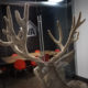 SEAN MORGAN'S PROSPECT BUCK